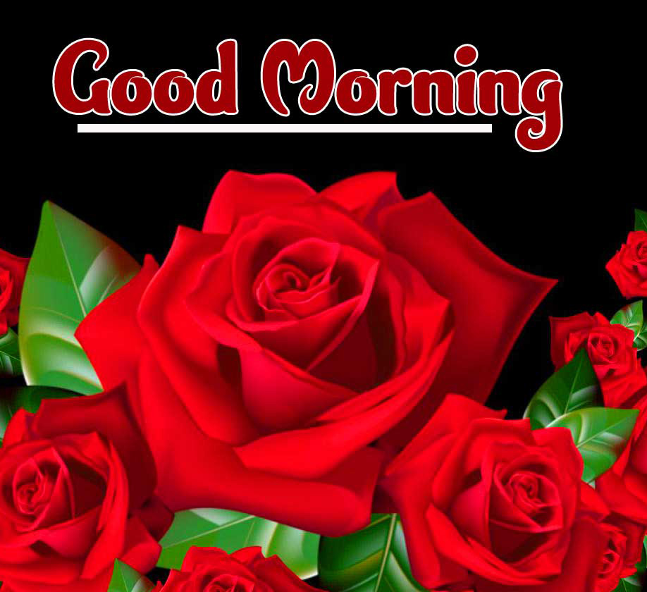 With Red Rose Beautiful 2021 Good Morning Images Pics Download