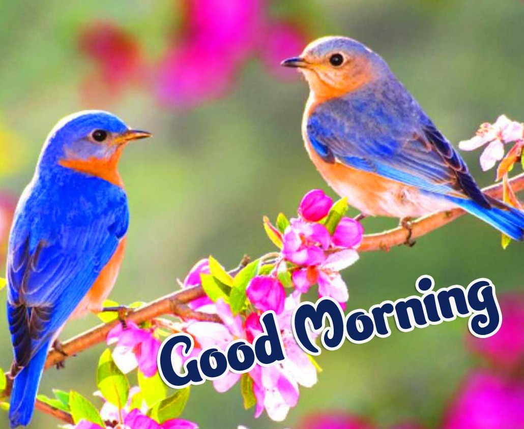 Beautiful 2021 Good Morning Images Wallpaper Free