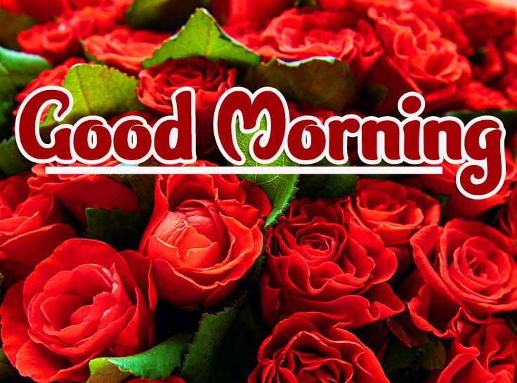 Rose Free Beautiful 2021 Good Morning Images Pics Download