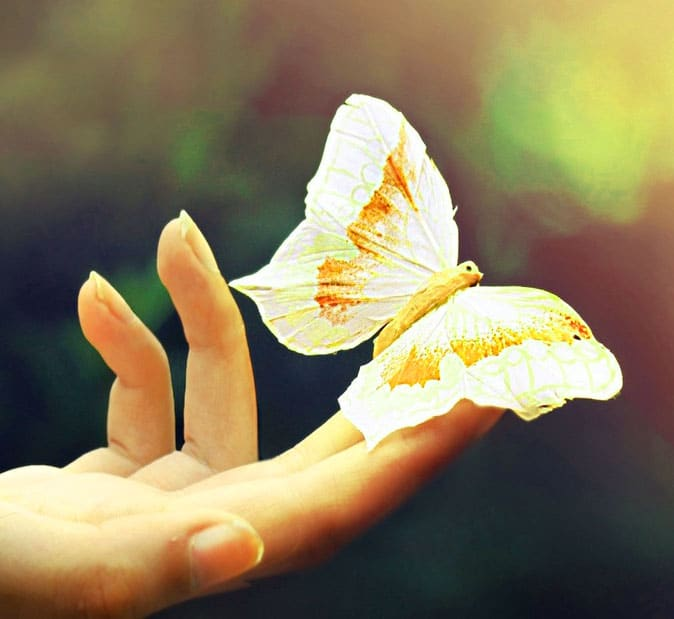 Best Butterfly Whatsapp Dp Download Images