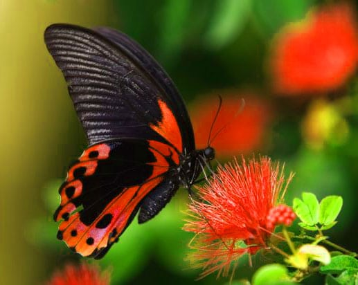 Best Butterfly Whatsapp Dp Download Photo