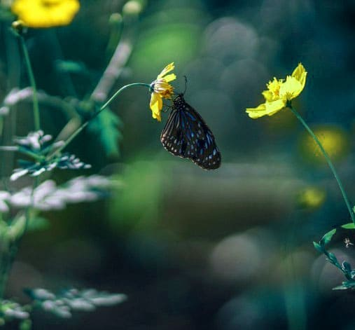 Best Butterfly Whatsapp Dp Free 1