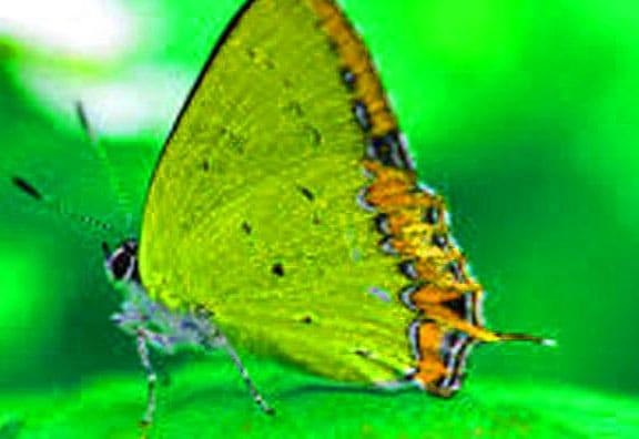 Best Butterfly Whatsapp Dp Hd
