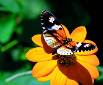 Best Butterfly Whatsapp Dp Images Download