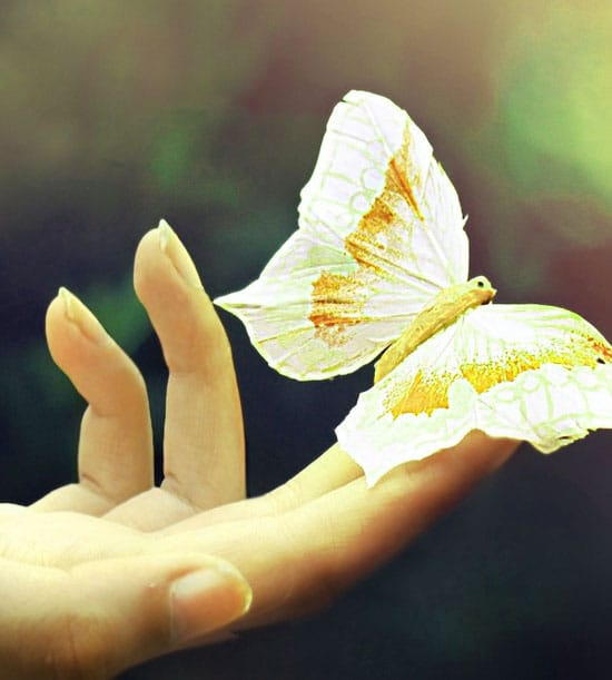 Best Butterfly Whatsapp Dp Images Photo