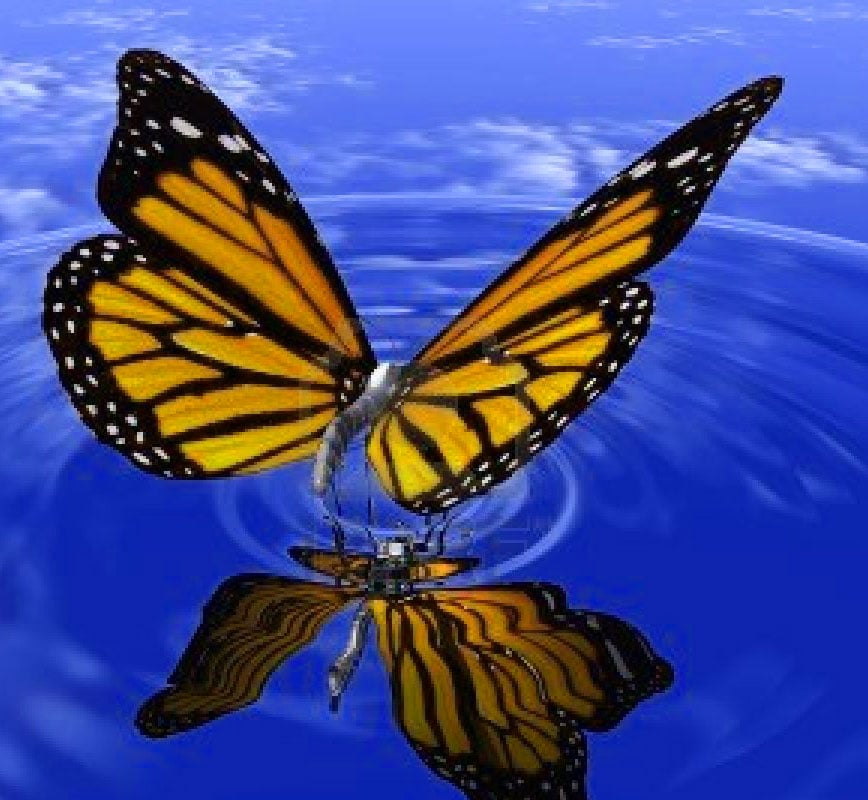 Best Butterfly Whatsapp Dp Images Pictures