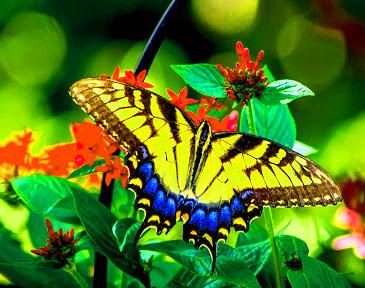 Best Butterfly Whatsapp Dp Images Wallpaper