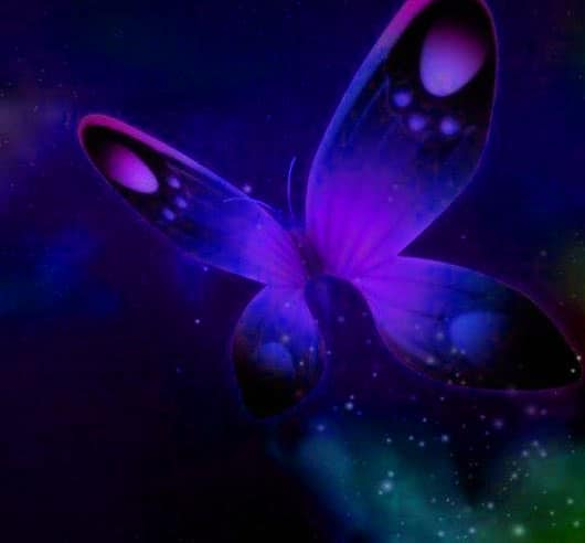 Best Butterfly Whatsapp Dp Photo Download