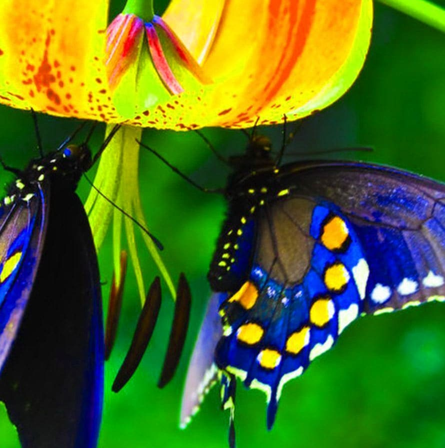Best Butterfly Whatsapp Dp Photo Images