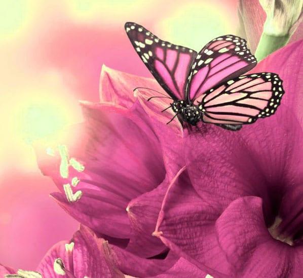 Best Butterfly Whatsapp Dp Photo Pics