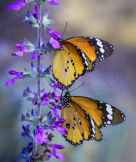Best Butterfly Whatsapp Dp Photo Pictures
