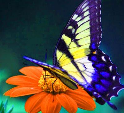 Best Butterfly Whatsapp Dp Photo Wallpaper