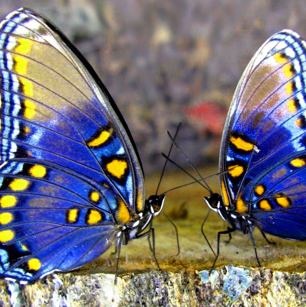 Best Butterfly Whatsapp Dp Pics Imnages
