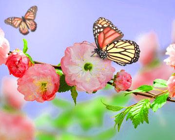 Best Butterfly Whatsapp Dp Pics Photo