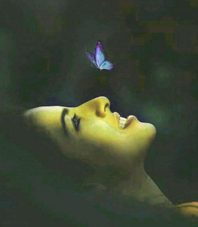 Best Butterfly Whatsapp Dp Pics Wallpaper