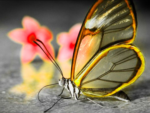 Best Butterfly Whatsapp Dp Pictures Photo