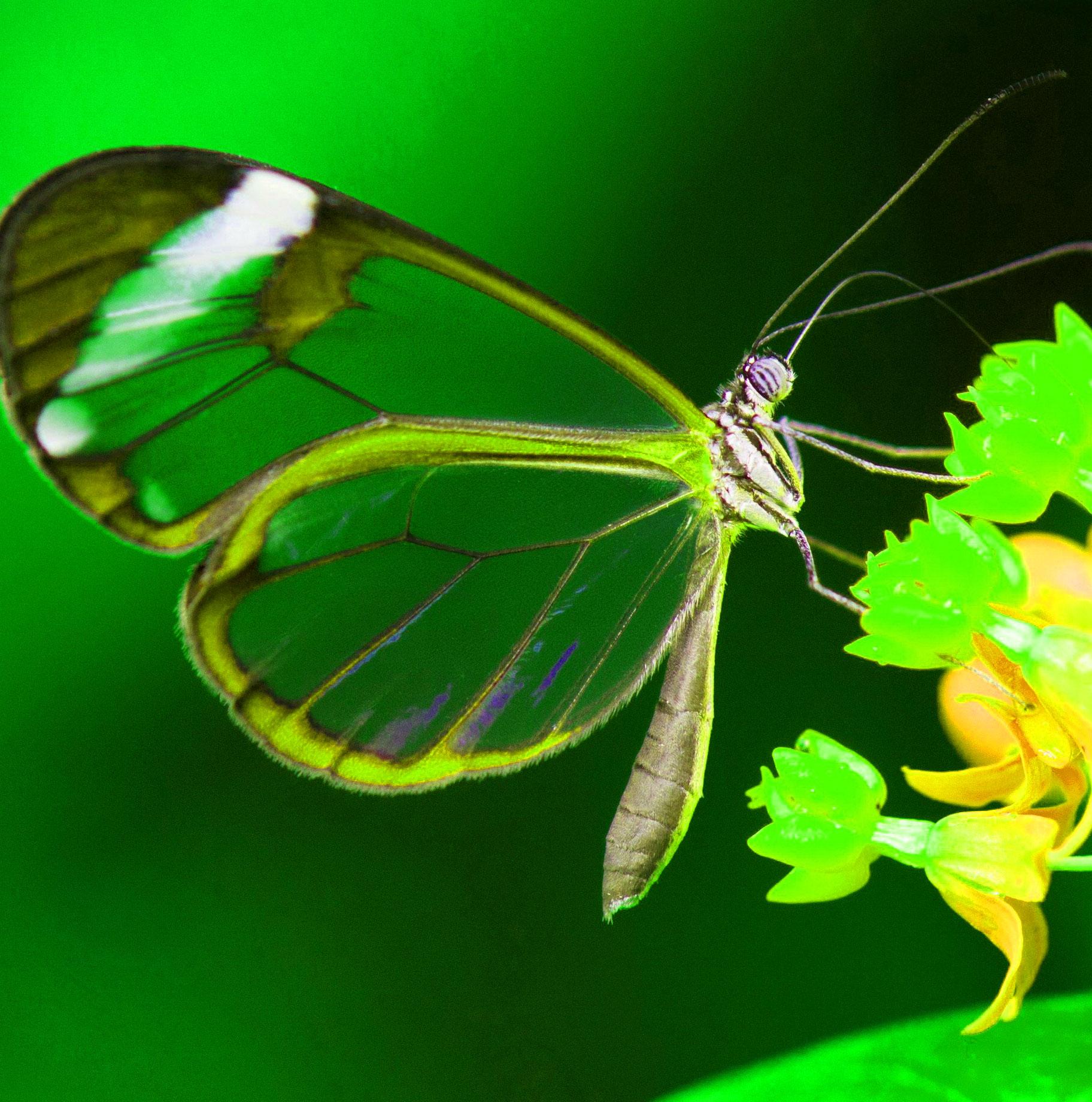 Best Butterfly Whatsapp Dp Wallpaper Images