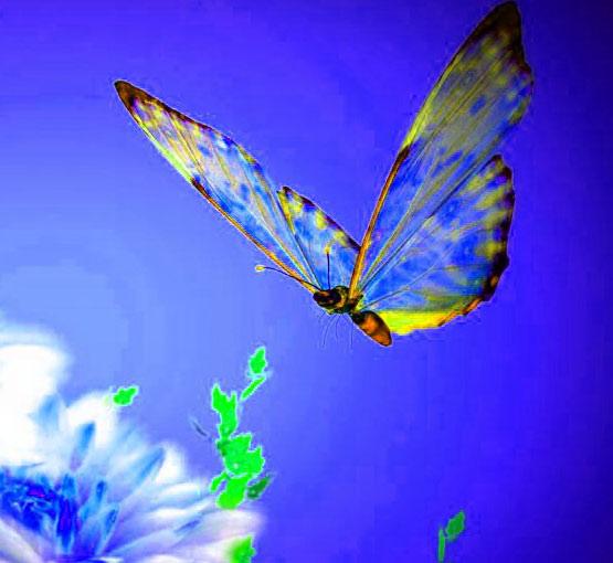 Best Butterfly Whatsapp Dp Wallpaper Photo