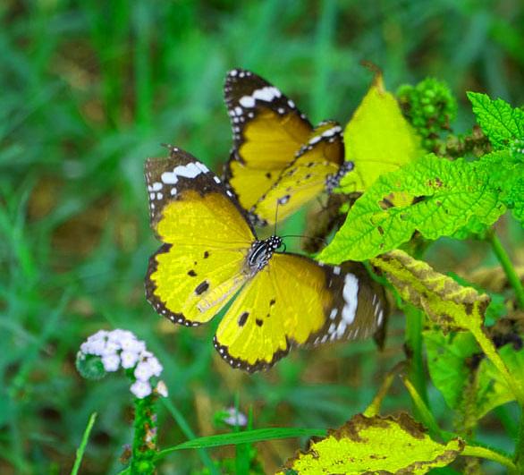 Best Butterfly Whatsapp Dp Wallpaper Pics