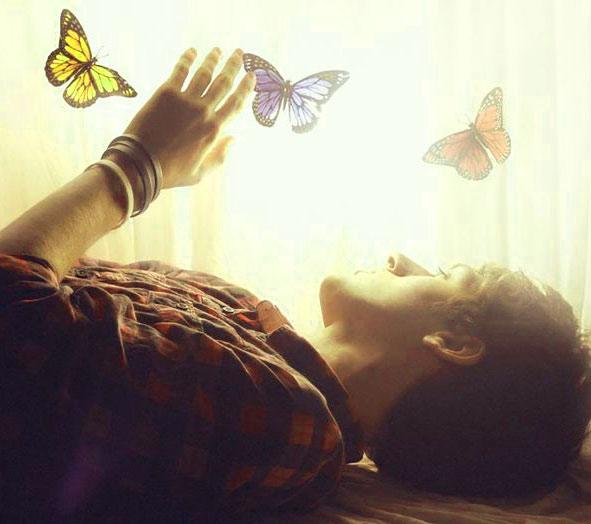 Best Butterfly Whatsapp Dp