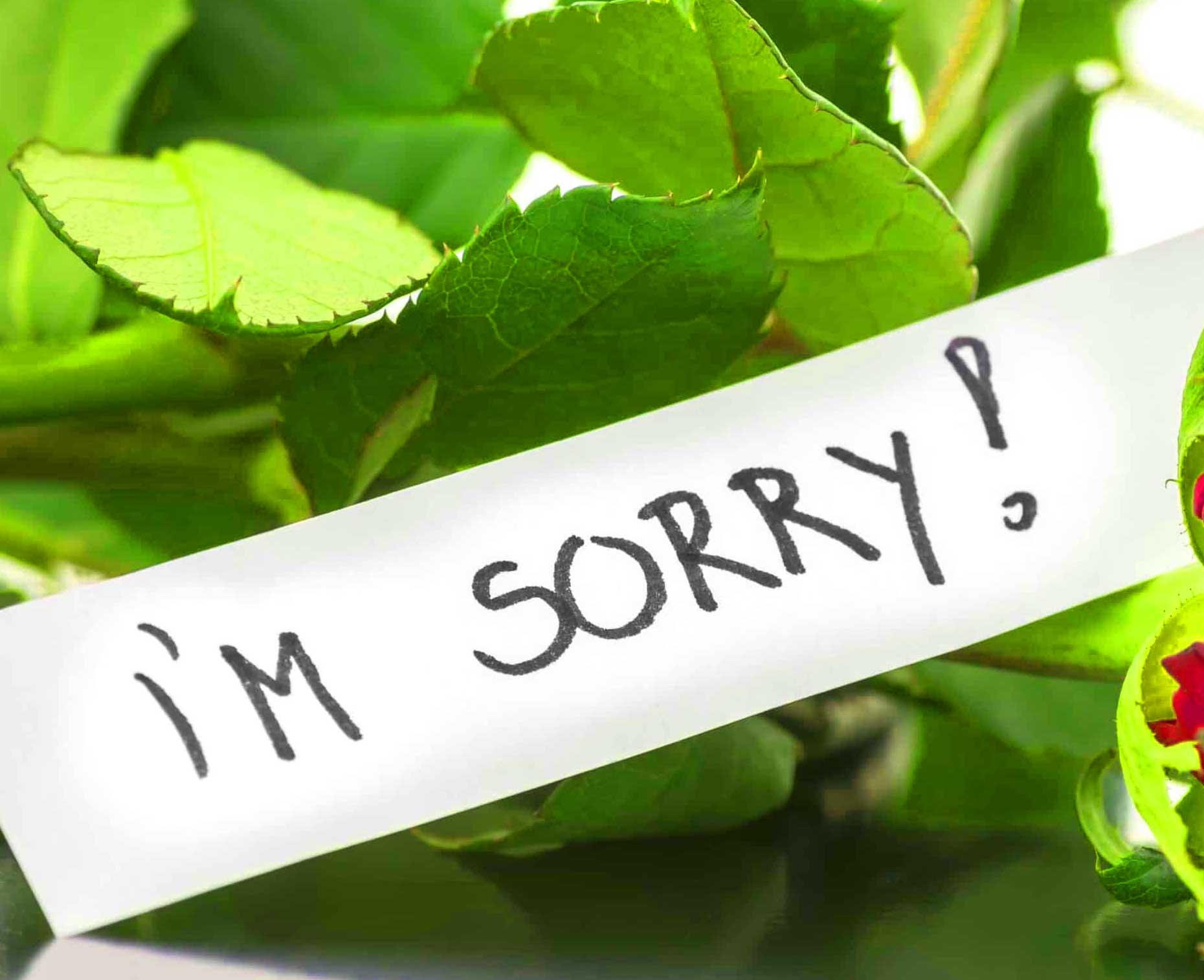 Best Sorry Whatsapp Dp Photo Wallpaper