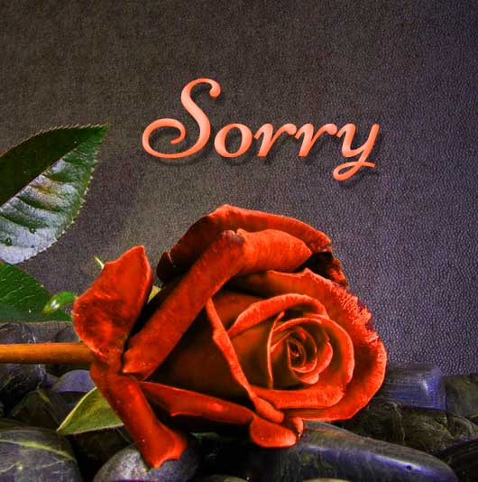 Best Sorry Whatsapp Dp Pictures Images