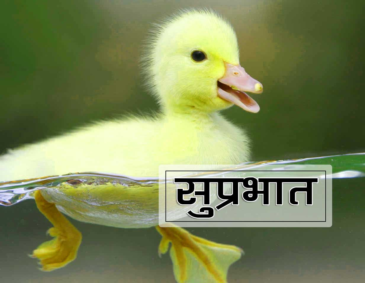 Best Suprabhat Pics Hd