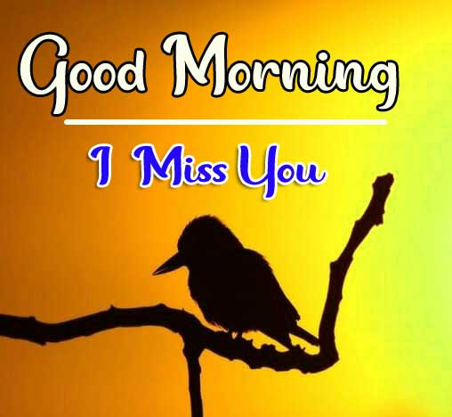Bird Latest Good Morning Images Free