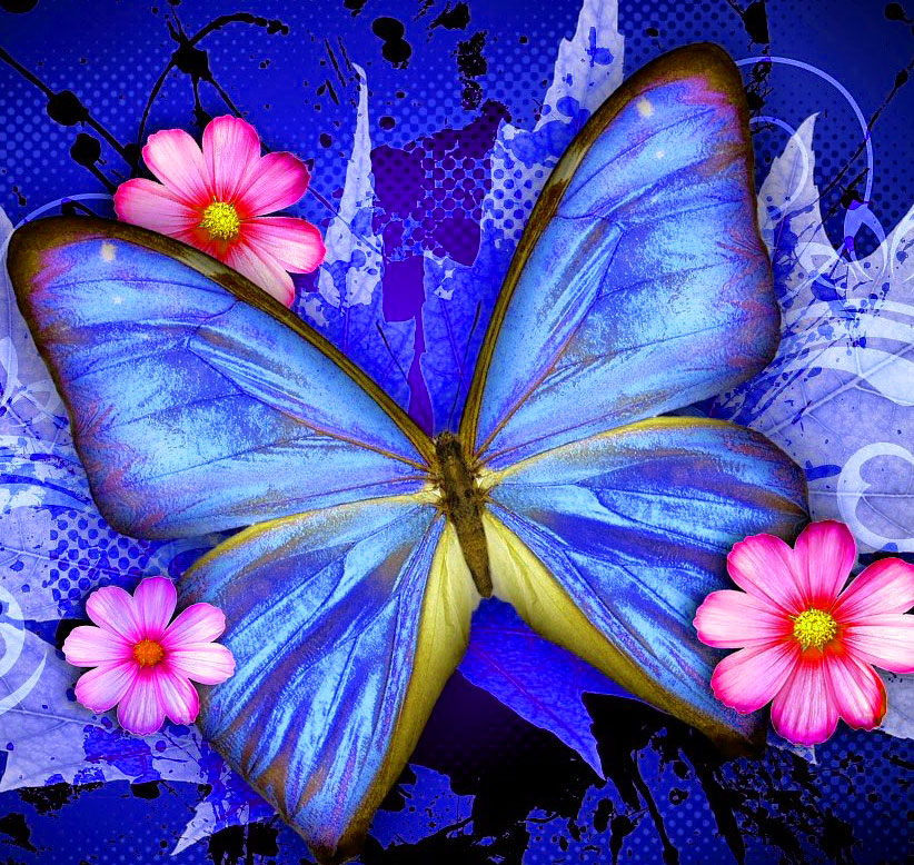 Butterfly Whatsapp Dp Download Free