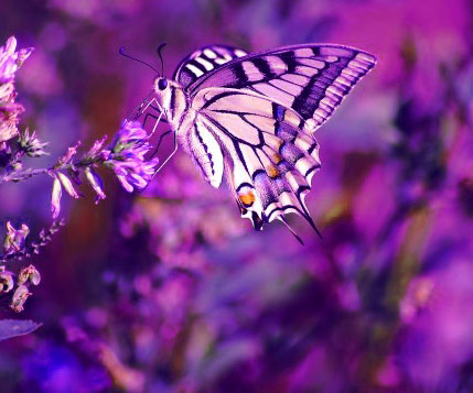 Butterfly Whatsapp Dp Download Images
