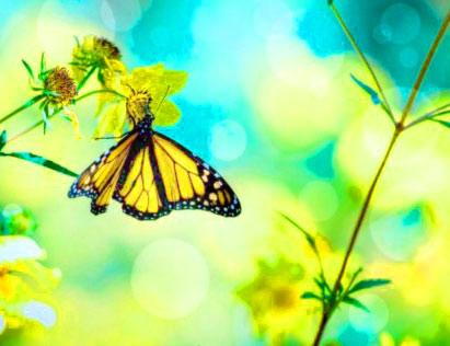 Butterfly Whatsapp Dp Download