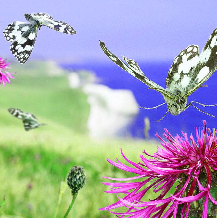 Butterfly Whatsapp Dp Free Hd Photo
