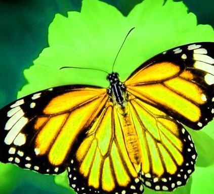 Butterfly Whatsapp Dp Free Hd Pics