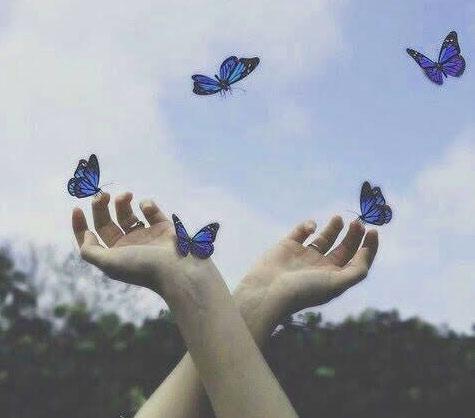 Butterfly Whatsapp Dp Free Hd