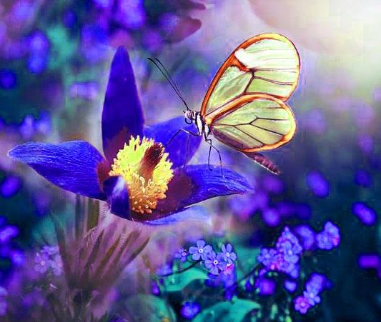 Butterfly Whatsapp Dp Free