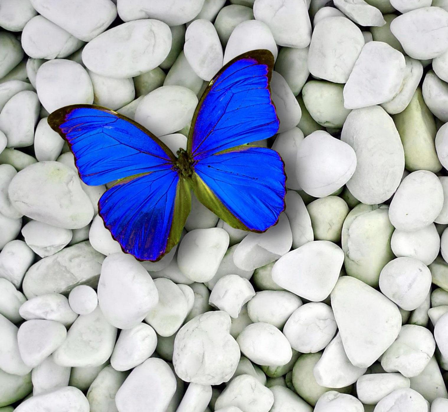 Butterfly Whatsapp Dp HD Free