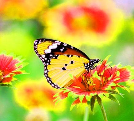 Butterfly Whatsapp Dp HD