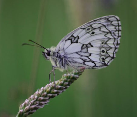 Butterfly Whatsapp Dp Images Downloads