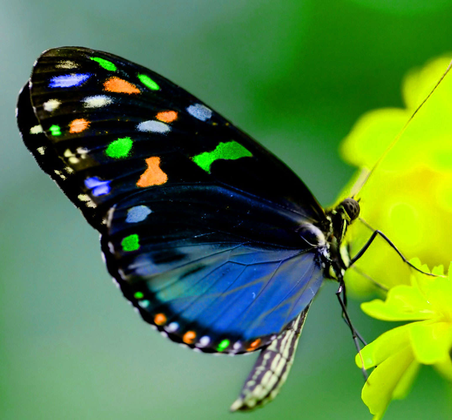 Butterfly Whatsapp Dp Images Free