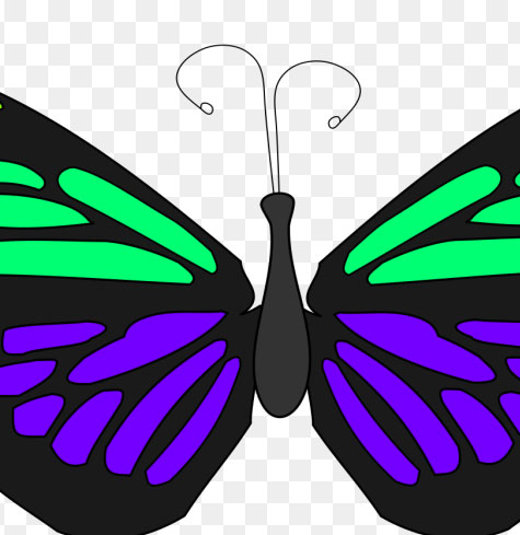 Butterfly Whatsapp Dp Images Hd Photo