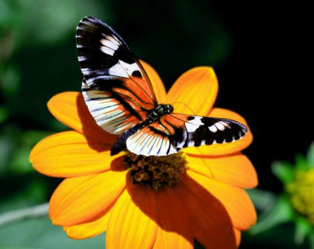 Butterfly Whatsapp Dp Images Hd