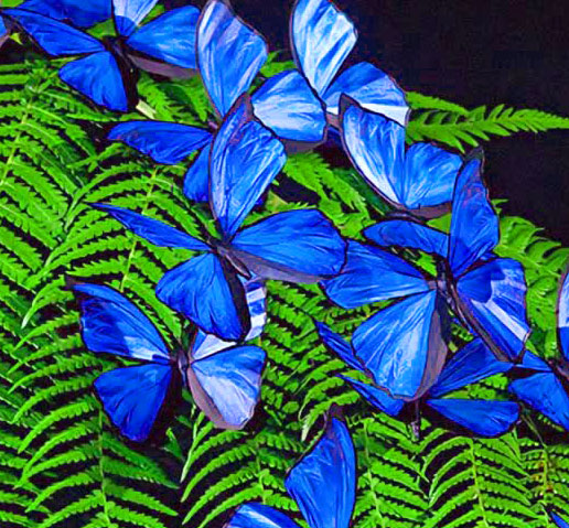 Butterfly Whatsapp Dp Images Photo