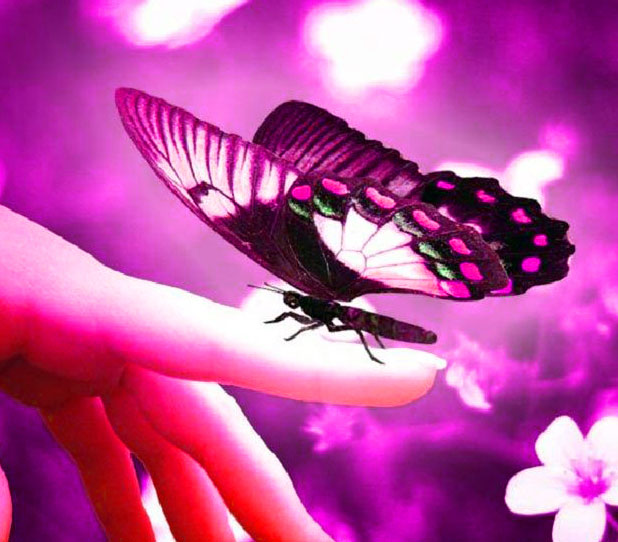 Butterfly Whatsapp Dp Images Pics