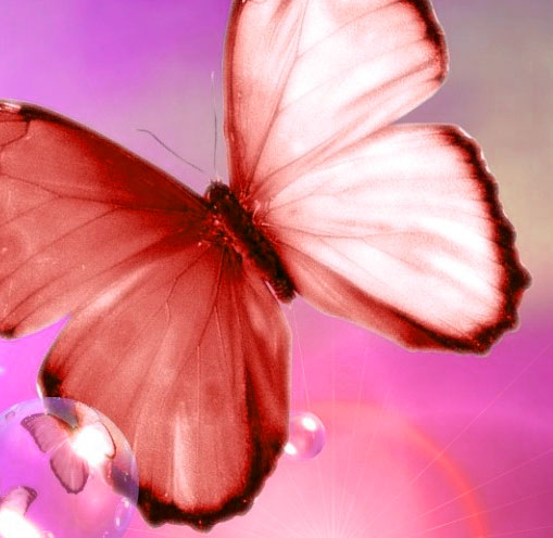 Butterfly Whatsapp Dp Images Pictures