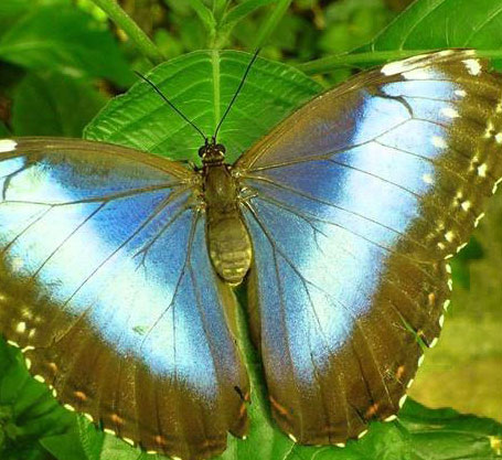 Butterfly Whatsapp Dp Images
