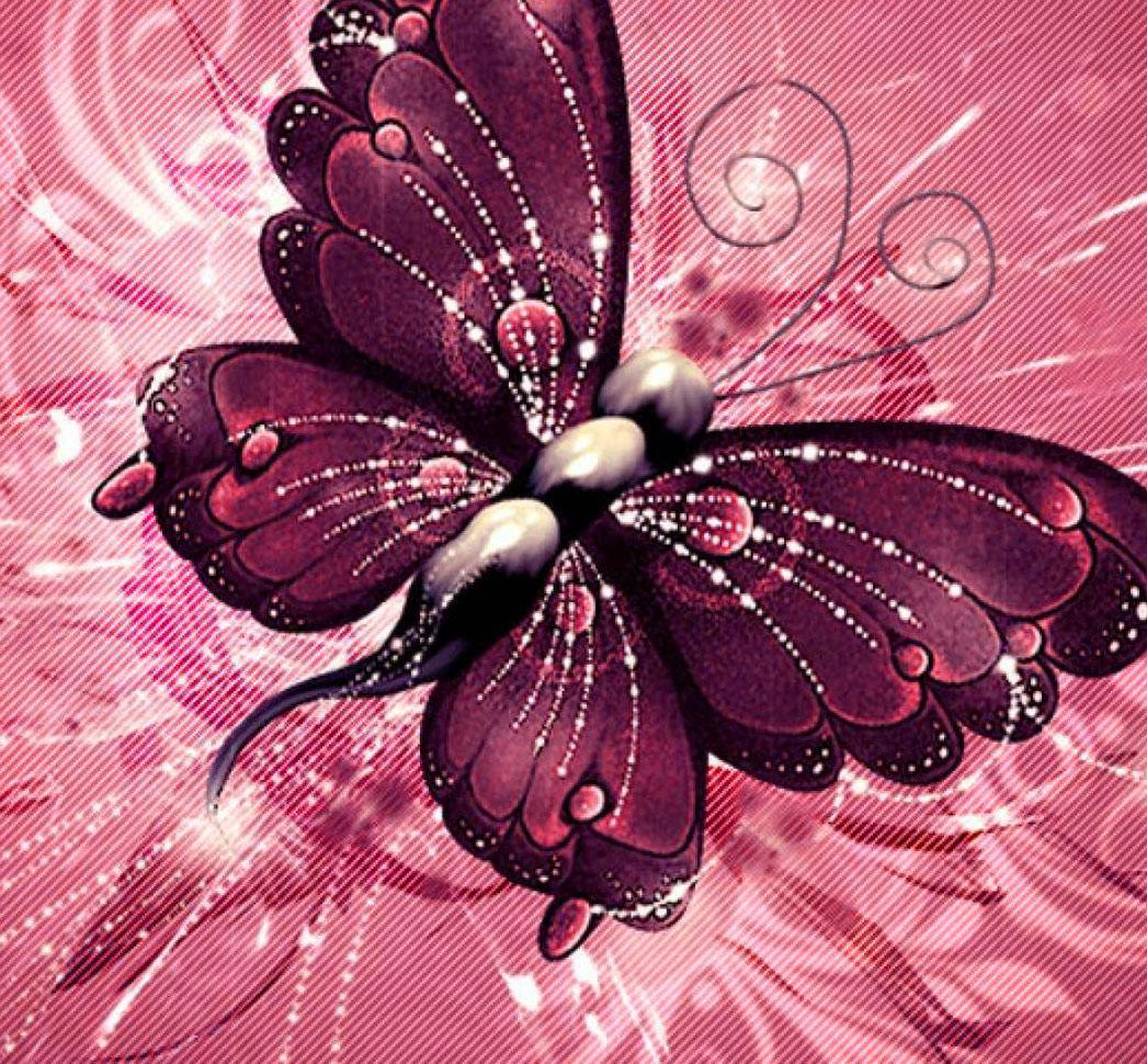 Butterfly Whatsapp Dp Photo Hd