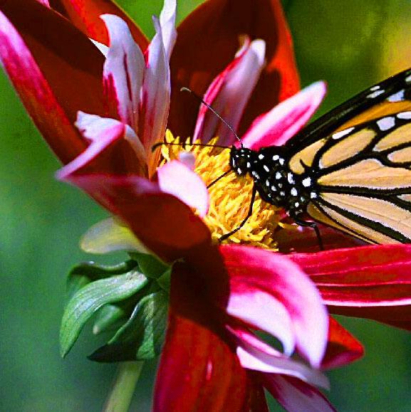 Butterfly Whatsapp Dp Pics FRee