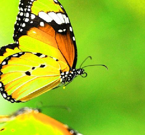 Butterfly Whatsapp Dp Pics HD