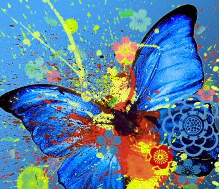 Butterfly Whatsapp Dp Pics Images