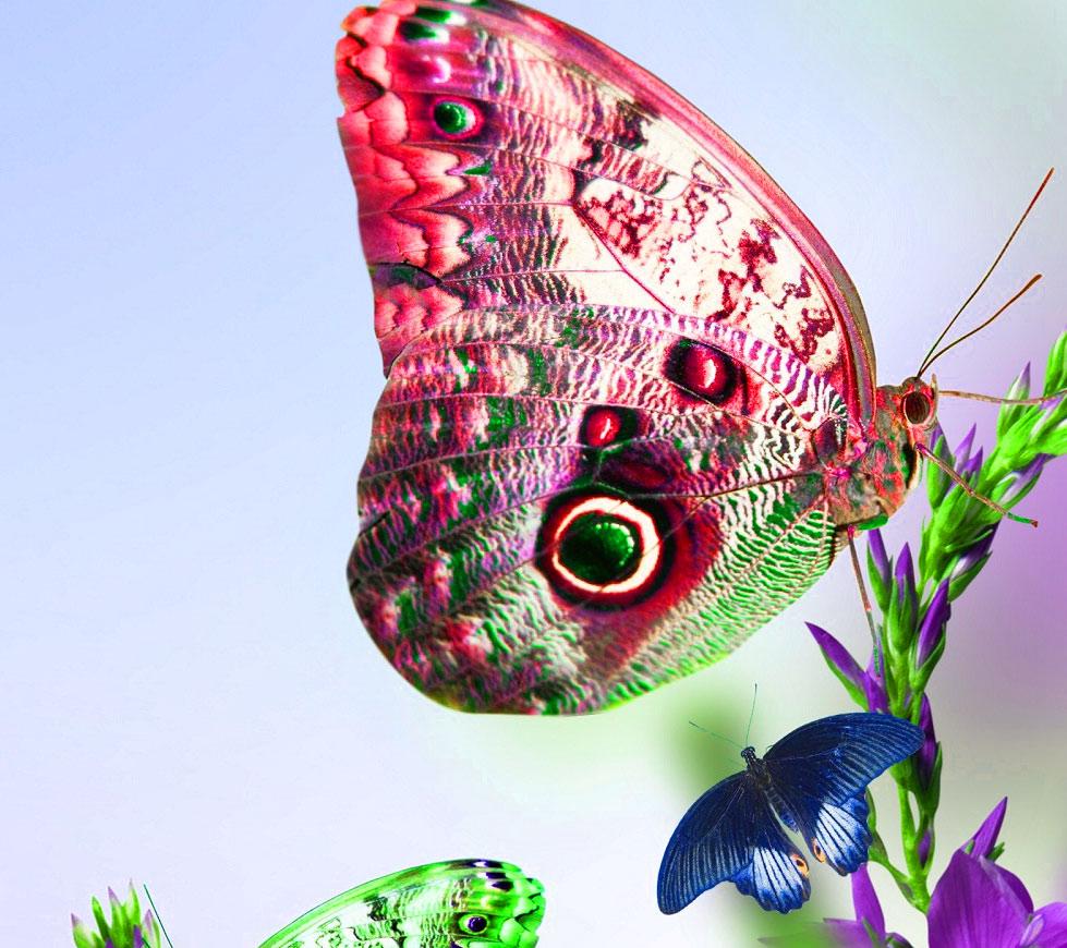 Butterfly Whatsapp Dp Pics Photo